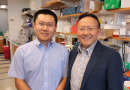 New genome-editing strategy developed at UMMS may lead to therapeutics Dan Wang, Guangping Gao and colleagues describe approach in Nature Biotechnology