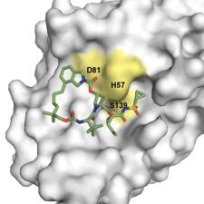 Structured Base Drug Design