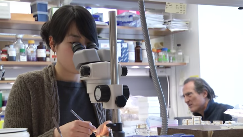 Woman looking in a microscope in a lab