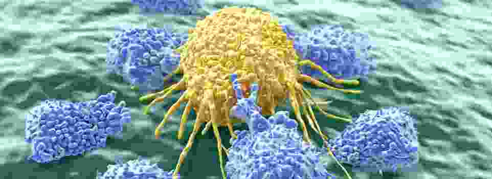innate immunity cancer cells being attacked