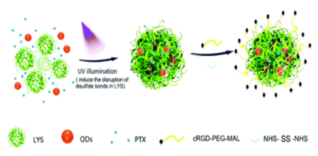 A photo-inducible protein–inorganic nanoparticle assembly for active targeted tumour theranostics