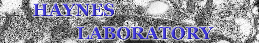 Haynes Lab Website banner