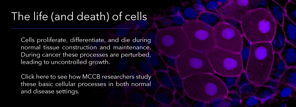 The life(and death) of cells
