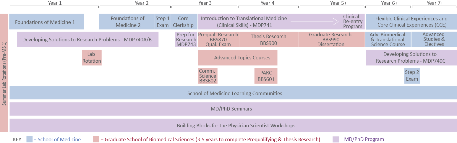 Study Timeline of MD/PhD Program at the Graduate School of