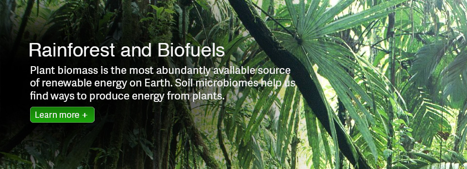 Rainforest and Biofuels