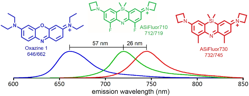 Fluorescent probes beyond the visible range