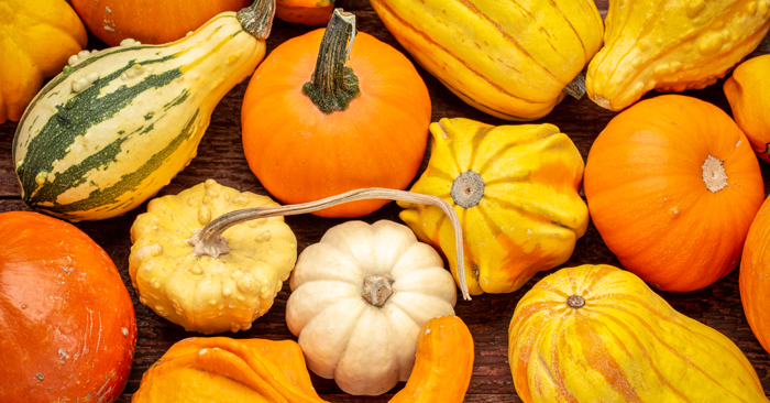 squash-season-nutrition-blog.jpg