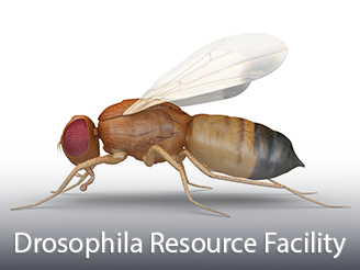 Cores-Drosophila.png