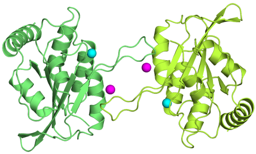 Crystal structure of the APOBEC3G catalytic domain reveals potential oligomerization interfaces.