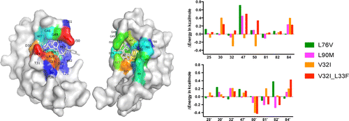 Drug resistance conferred by mutations outside the active site through alterations in the dynamic and structural ensemble of HIV-1 protease.